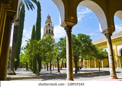 Inside the mezquita (a surprising mixture of mosque and cathedral) in Cordoba, Spain. A big courtyard with orange trees and cypresses. Bell tower in the background.