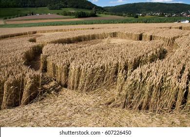 Inside of a mysterious crop circles, found in Loehningen, Schaffhausen, Switzerland, July, 2012