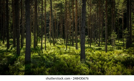 inside of the northern forest in summer