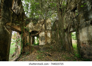 Inside Old house, green,tree
