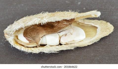 Inside of an opened mango seed