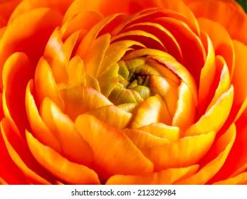 Inside an orange flower