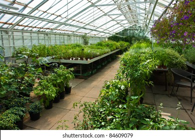 Inside a plastic covered horticulture greenhouse of garden center selling flowers and plants