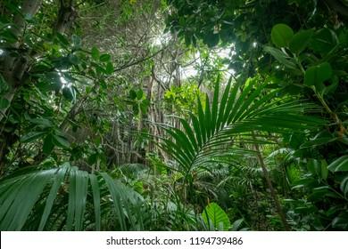 inside rainforest, tropical forest, jungle landscape -