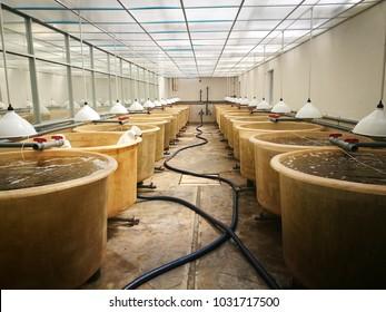Inside a shrimp farm