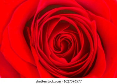 Inside swirls of a red rose