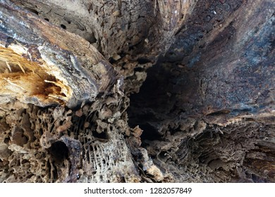 The inside of an uprooted tree.