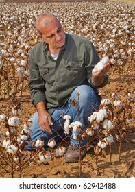 Inspecting Cotton, Cotton Farmer