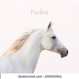 Inspirational card: white arabian horse portrait with inspirational quote
