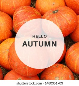 Inspirational motivation quote hello autumn with pumpkin on background, holiday and seasonal concept