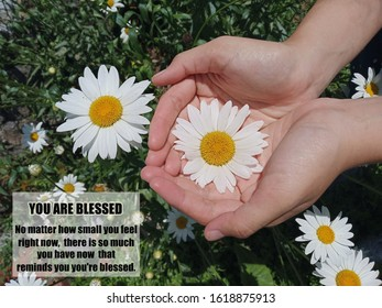 Inspirational motivational quote - You are blessed. No matter how small you feel right now, there is so much you have now that reminds you are blessed. With background of daisy flower in hand.