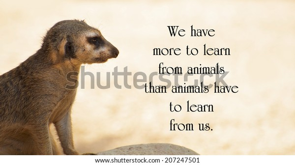 Inspirational Quote About Animals By Anthony | Royalty-Free ...