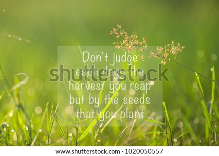 Inspirational Quote Dont Judge Each Day Stock Photo Edit Now Magnificent Planting Seeds Inspirational Quotes