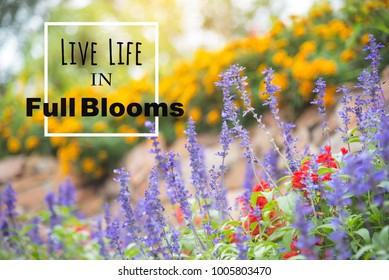 Inspirational quote: Live life in full blooms on colorful flower garden background