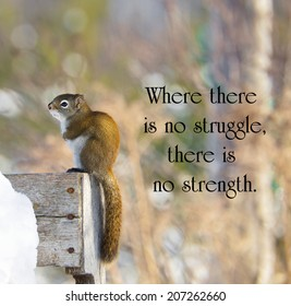 Inspirational quote on adversity by Oprah Winfrey with a sad little squirrel shivering with cold in the winter.