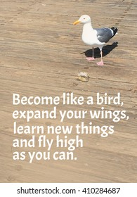 Birds Quotes Stock Photos Images Photography Shutterstock
