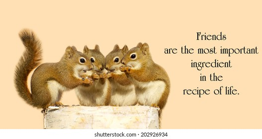 Inspirational quote on friendship by Dior Yamasaki with four little squirrels sharing seeds.