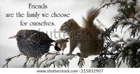 Inspirational Quote On Friendship By Unknown Stock Photo Edit Now