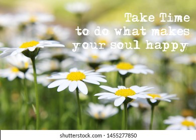Inspirational quote on happiness, your soul with soft focus daisies in field background
