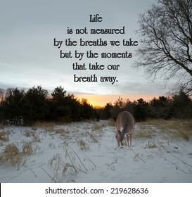 Inspirational quote on life by an unknown author with a lone doe looking for food in the meadow at sunrise in the winter.