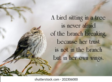Inspirational quote on life with a pine siskin bird perched on a branch in winter, looking up.