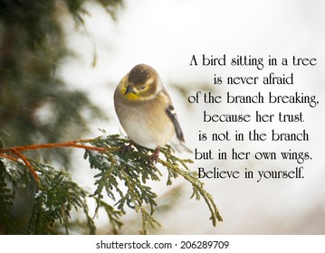 Inspirational quote on life with a pretty goldfinch perched on a branch in winter.