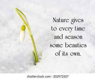 Inspirational quote on nature by Charles Dickens with a snow drop flower poking out of the snow in the early Spring.