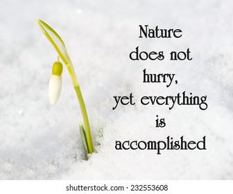 Inspirational quote on nature by Loa Tze with a pretty snowdrop flower growing out of the snow, getting ready to bloom.