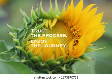 Inspirational quote - Trust the process. Enjoy the journey. With beautiful big sunflower in bloom in the garden closeup on blurry background. Motivational words concept with nature flower blossom.