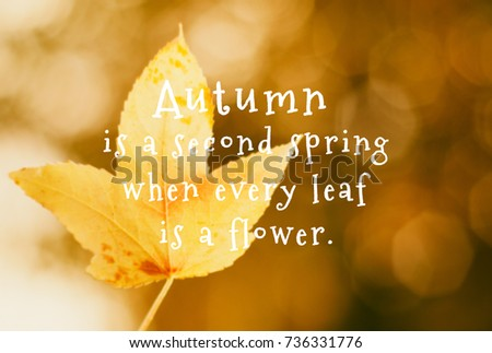 Autumn Quotes Inspirational Inspirational Quotes Autumn Second Spring Where Stock Photo (Edit  Autumn Quotes Inspirational