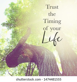 Inspirational Typographic Quote - Trust the timing of your life