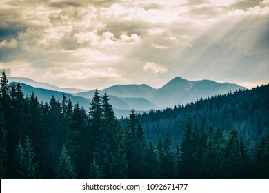 Inspiring Dramatic Mountains Landscape Panorama, beautiful day in summer Tatras, flowers and mountain ridge over blue sky in Zakopane, Poland