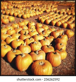 Instagram Filtered Image of Pumpkins at a Pumpkin Patch in Georgia, USA