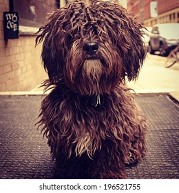 Instagram filtered style image of a cute dog in New York City.