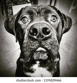 Instagram filtered style image of a large dog with wide eyes and a large nose in New York City.