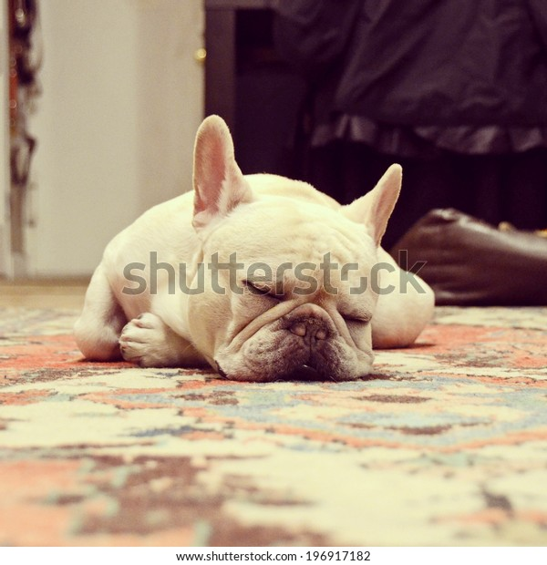 Instagram filtered style image of a sleeping French Bulldog in New York City.