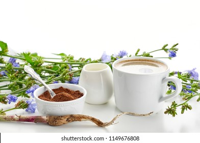 Instant chicory root roasted powder, cup of caffeine-free beverage, milk jug and fresh chicory flowers. Close up view with copy space on white background