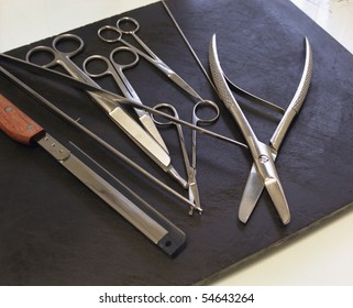 Autopsy Instruments Images, Stock Photos & Vectors | Shutterstock