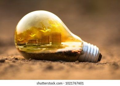 insurance protection money and invest concept, Tree growing on money in light bulb with sunlight