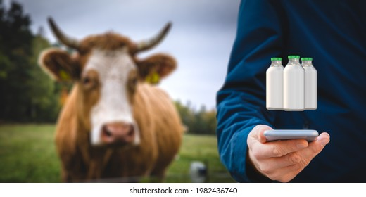 Intelligent agriculture concept with milk production control on smart phone app. Farmer analyze production, cow in background. Customer buy local organic milk directly from farmer.