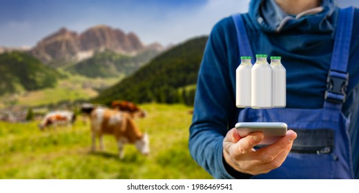 Intelligent agriculture concept with milk production control on smart phone app. Farmer analyze production, cows in beautiful nature in background.