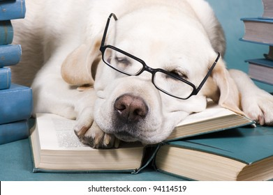 Intelligent Dog