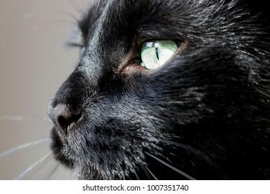 The Intense Gaze of a Black Cat