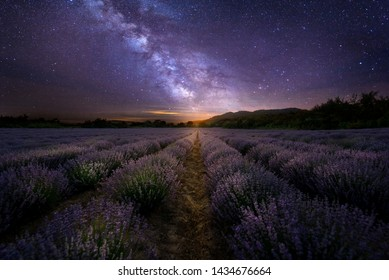 Intense purple lavender field оverwhelmed with blooming bushes grown for cosmetic purposes. Sunset time with sky filled with cumulus clouds and rays sunlight.  near Burgas, Bulgaria at night