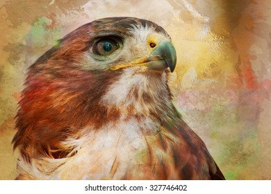 The intense stare of the red-tailed Hawk (Buteo jamaicensis) is obvious in this portrait of the wild animal. A watercolor treatment has been added in post processing.