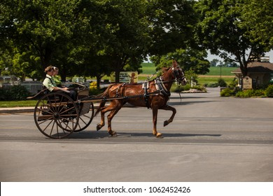 Intercourse, PA, USA - June 24, 2012: Young Amish youths use a horse and two-wheel wagon for transportation in the summer in Lancaster County, PA.