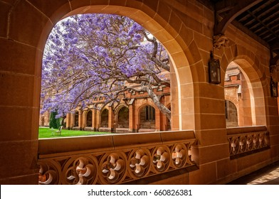Interesting angle view looking through the passageway towards the inner courtyard of the main faculty historic facade building of University of Sydney, Australia. The famous Jacaranda tree was there.