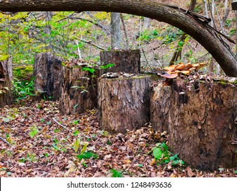 Interesting assemblage of tree stumps.  Image taken in the autumn in south central Pennsylvania.