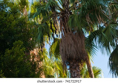 Interesting close up palms and trees in warm sunny day