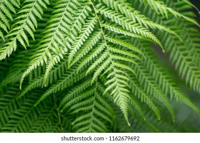 interesting closeup of a fern plant's branches showing a rich examples of natural patterns